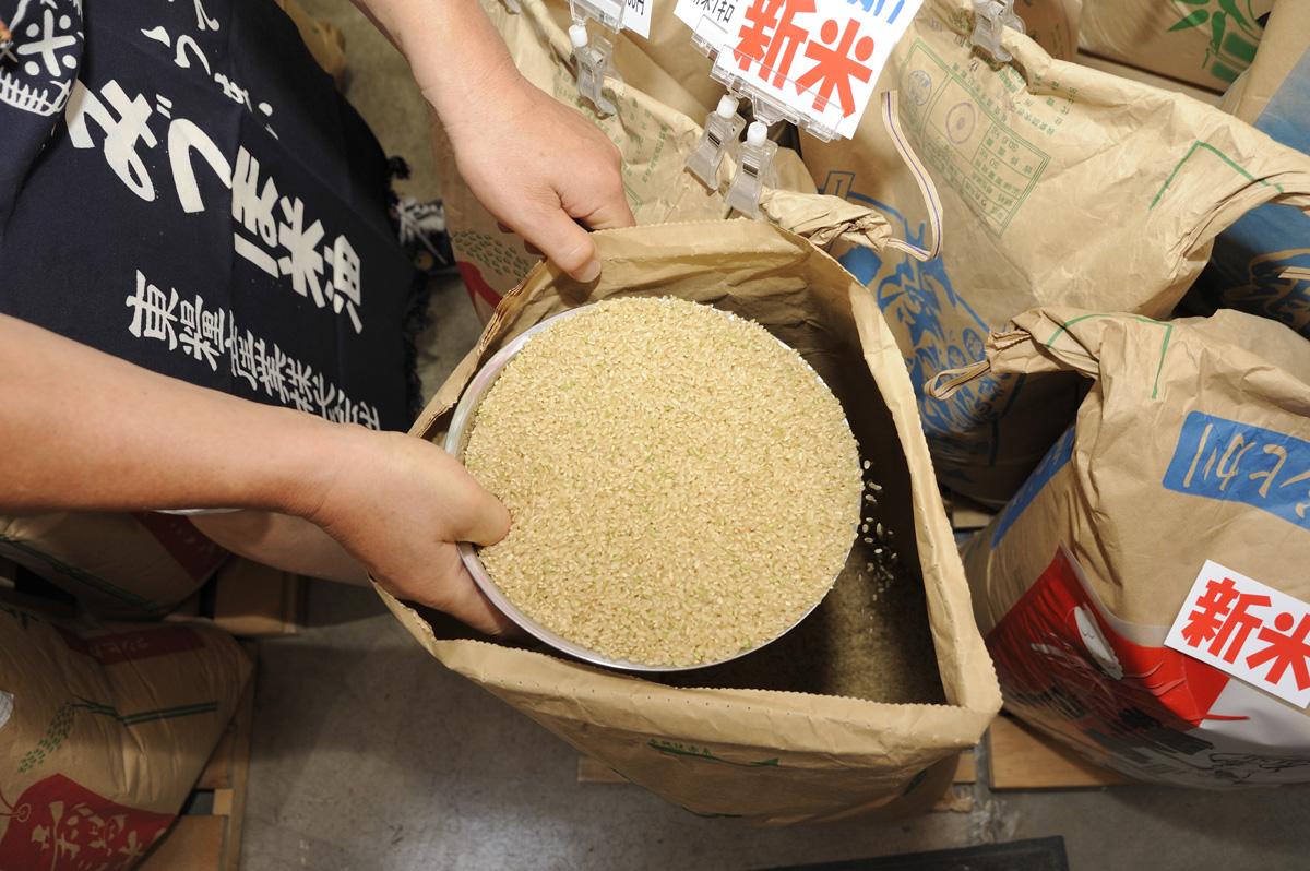 RiceMeister_re_DSC3242